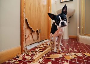 Dog Destroying Door