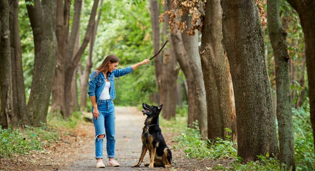If the Dog You're Walking is Barking at Another Dog, What Should You Do