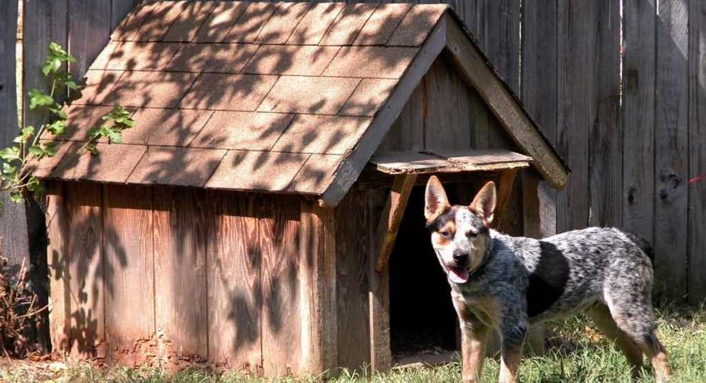 Everything You Need to Know About Dog House Insulation in 2021